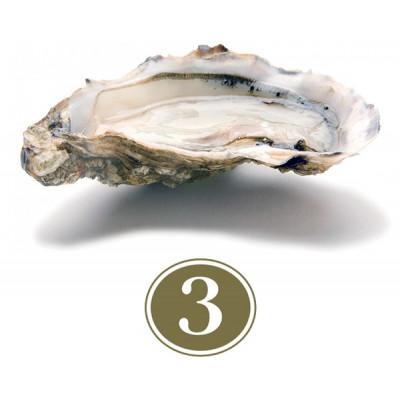 Fine de Claire Oysters #3
